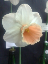Hawley Rose
