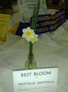 Champion Amateur Bloom 2013 Leongatha Show